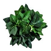 Coronita din frunze verzi