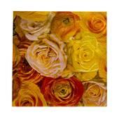 Servetele de masa, cu model trandafiri galbeni-portocalii