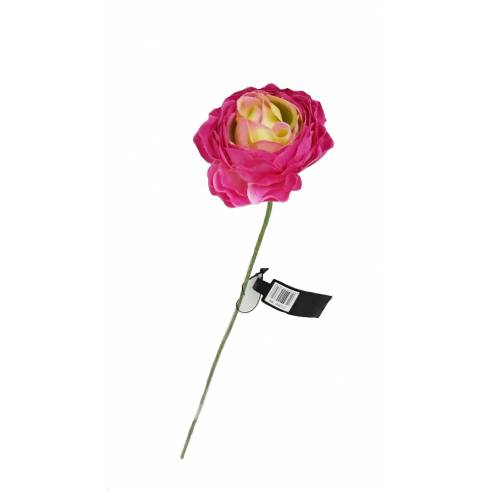 Fir trandafir, roz-inchis