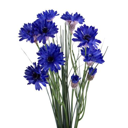 Fir flori de camp, mov