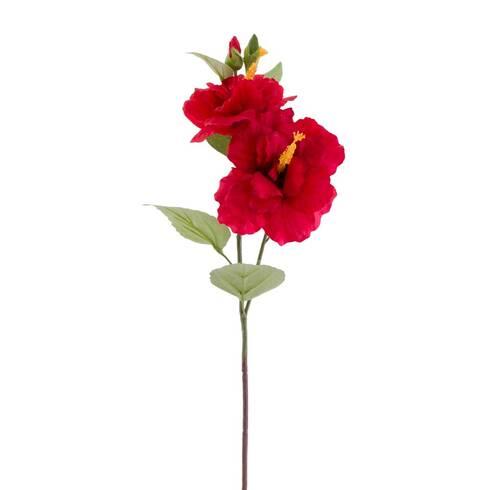 Fir hibiscus, rosu