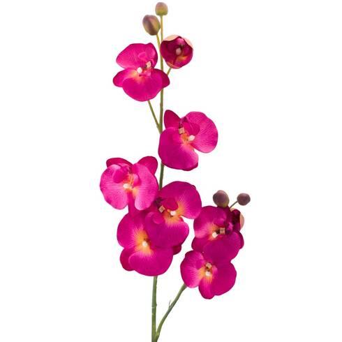 Fir orhidee ciclam