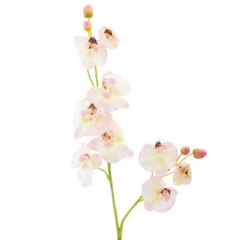 Fir orhidee, galben-roz